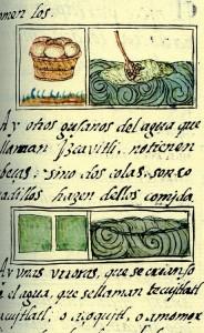 Illustration spiruline Lac Texcoco du 16ème siècle source Codex Florentin, livre 11