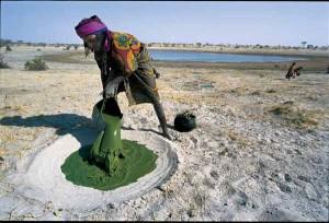 Récolte du Dihé au lac Tchad