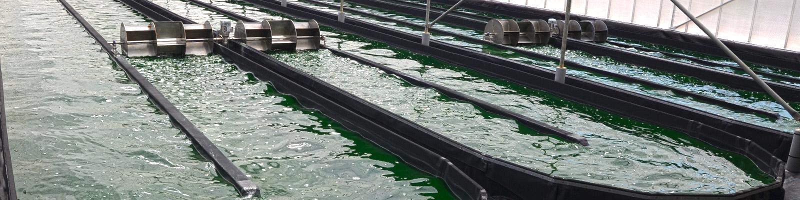 Bassins de production sous serre